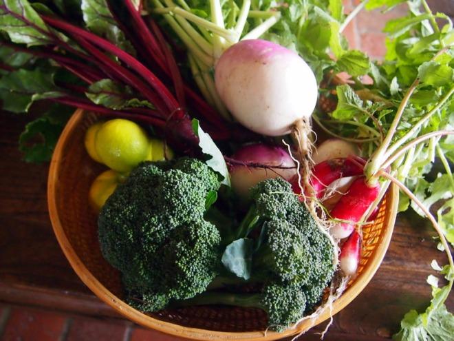 Winter Garden Produce