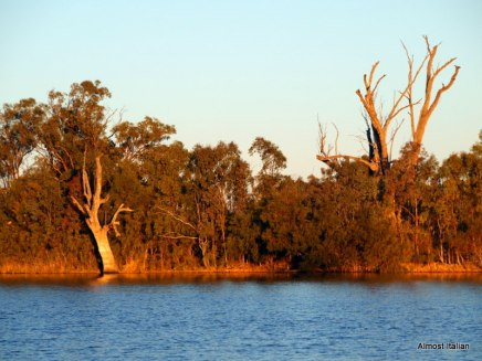 The banks of the Murray River at Lyrup, South Australia