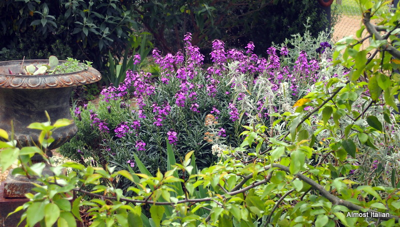 Purple flowers everywhere attract pollinating insects.