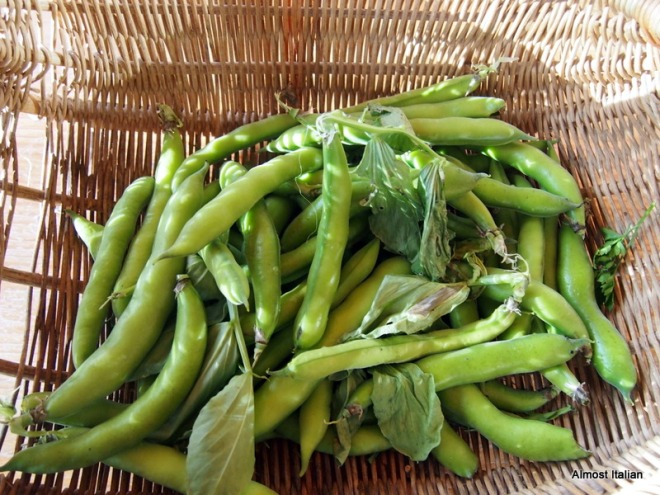 broadbean glut. Time to freeze.