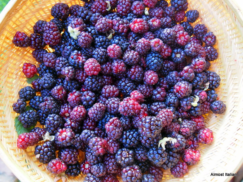 boysenberries  and youngberries.