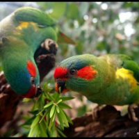 Vivid Birds of Healesville.