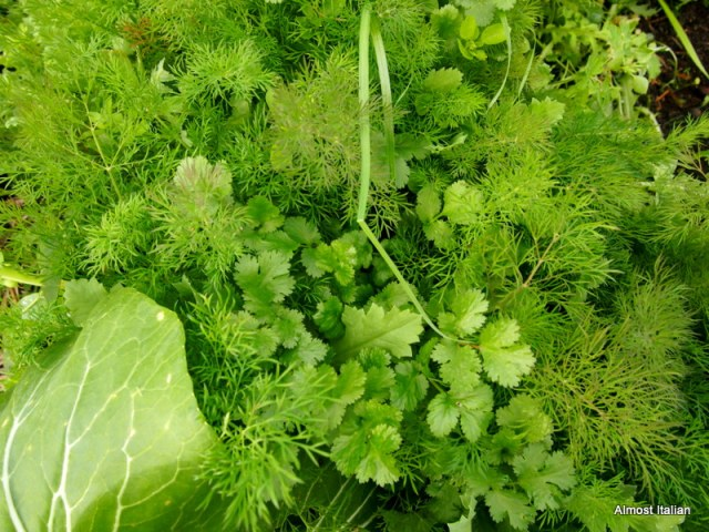 Winter herbs- dill and coriander.