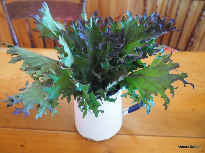 A bouquet of kale.