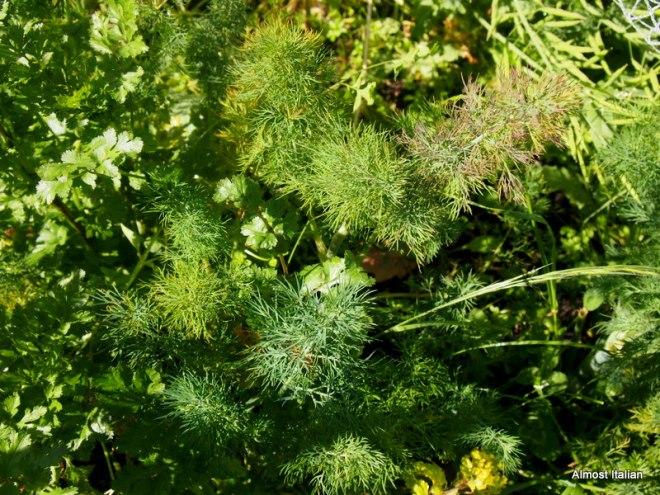 Masses of herbs