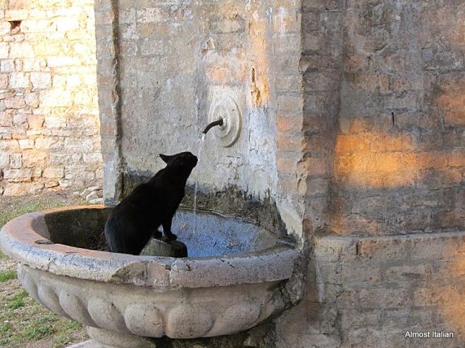 ll gatto nero di Spello.