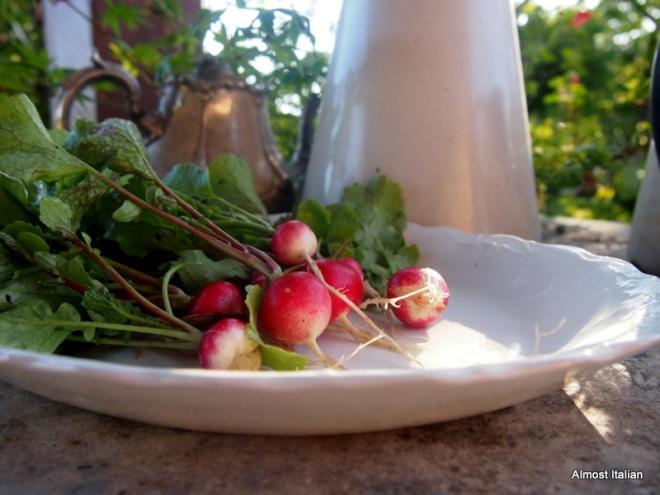 aly moning radish harvest