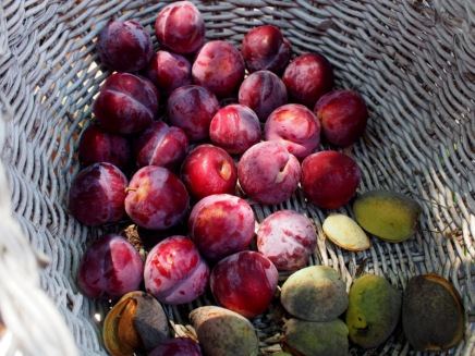 Plums and almonds