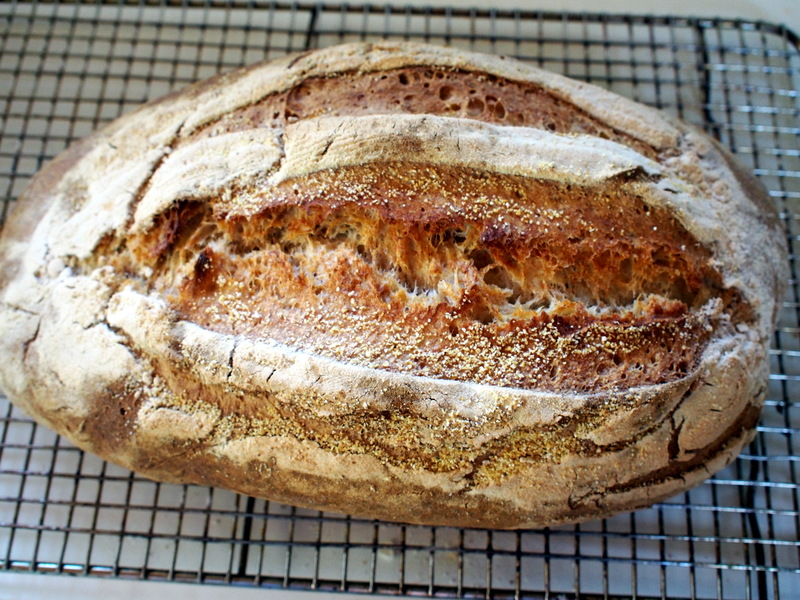 My 35 % wholemeal loaf. I like a good spring!!