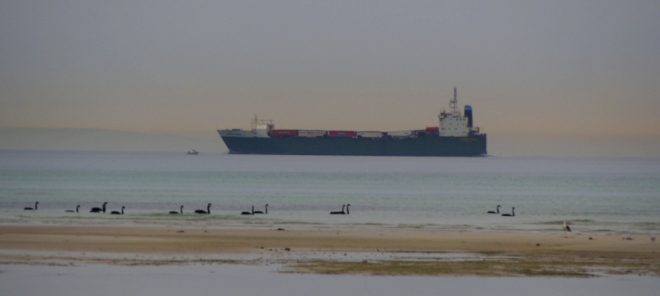 A half empty cargo ship moves steadily across the channel towards the 'heads'. Black swans cruise by in the foreground.