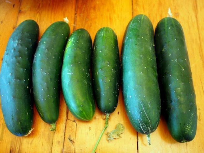 Cucumbers galore
