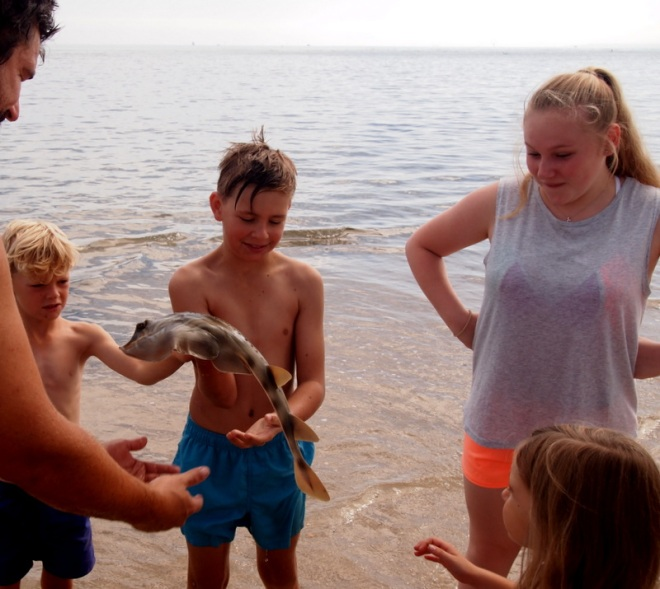 Noah went diving for a baby Banjo shark. All the kids get a pat. Claudia loks a bit horrified but not as scared as the poor beast. after the lesson is over, it is released back into the sea.