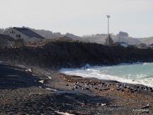 seascape, Oamaru
