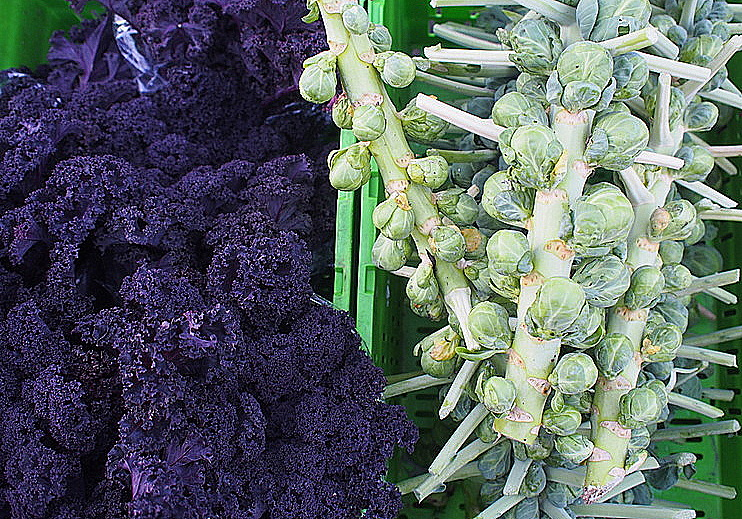 Purple Kale and Brussel Sprouts, Invercargill Farmers' Market