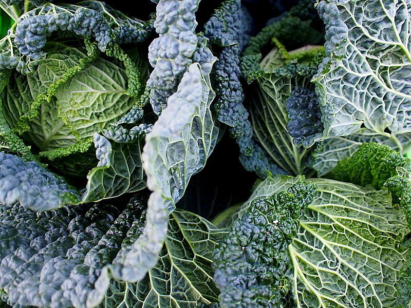 Invercargill Cabbage