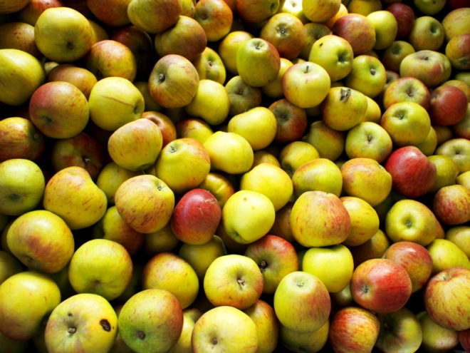 Farmgate Apples Galore- Central Otago, New Zealand