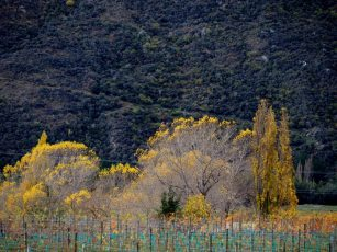 central otago in autumn