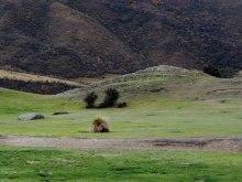 Rolling plains near Gibbston