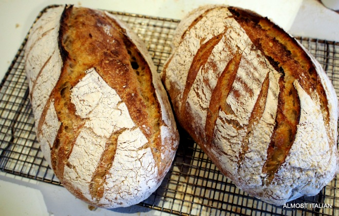 High Hydration Sourdough loaves.
