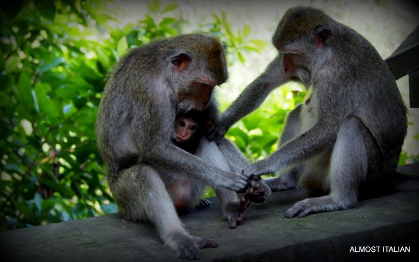 Monkeys of the Bukit Peninsula,Bali