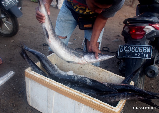 A Buyer inspects some large Barracuda.