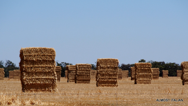 Towers of straw bails follow the wheat harvest.