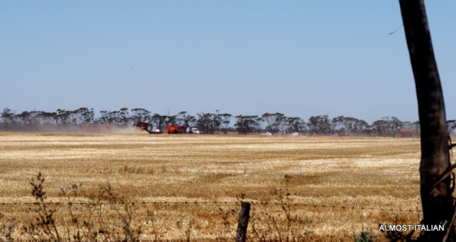 Harvesters busy at work on a Sunday.