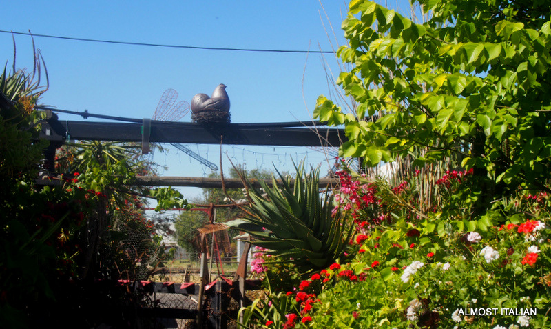 chook, barbed wire nest and Torii gate