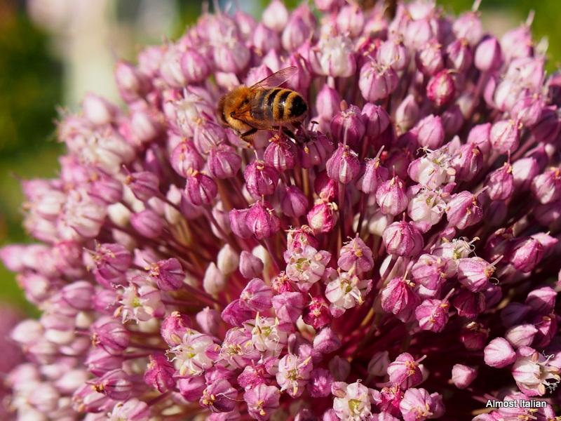 Let it Bee. In My Garden, January2017