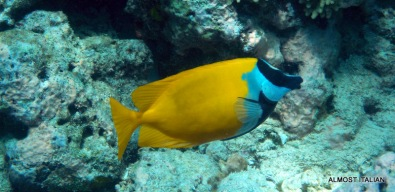 Tropical fish, Pemuteran