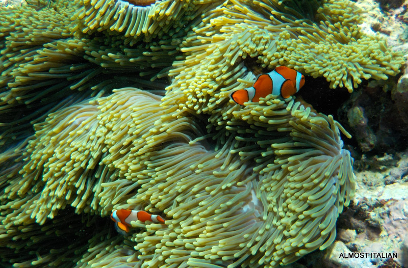 Finding Nemo in North West Bali