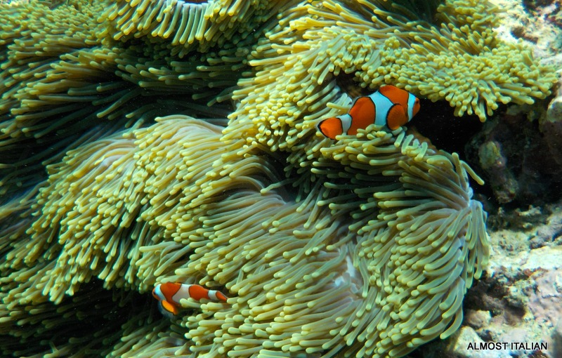 Finding Nemo in North WestBali