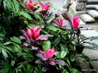 Lush planting and screening