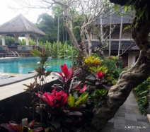 Pool area. Honeymoorn guesthouse, Ubud