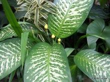 Lush plants, Honeymoon Guesthouse, Ubud.OLYMPUS DIGITAL CAMERA
