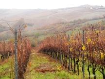 Rainy day in the Oltrepo