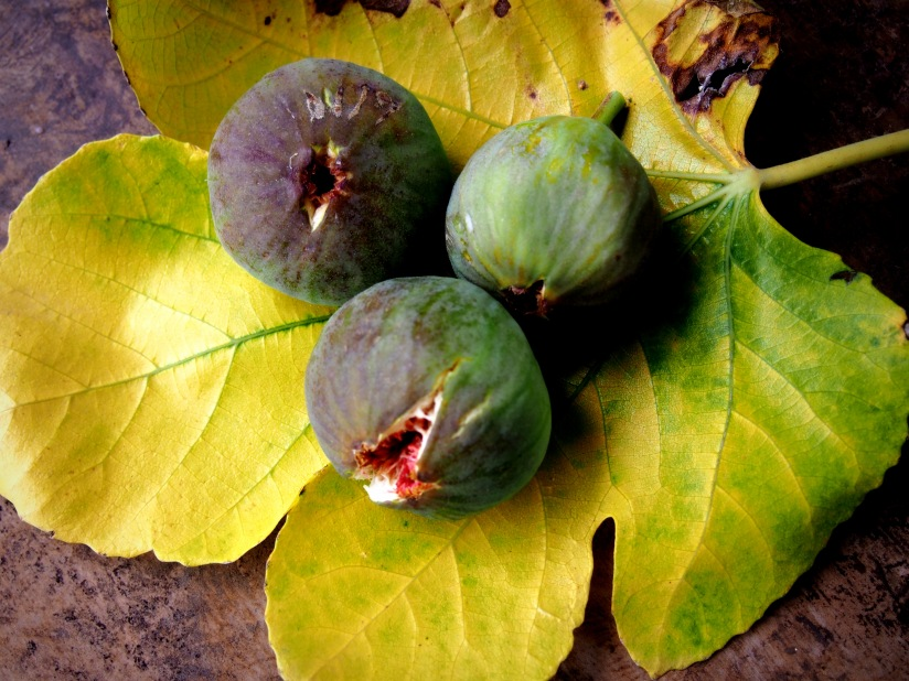More Figs Please and Another LovelyCake