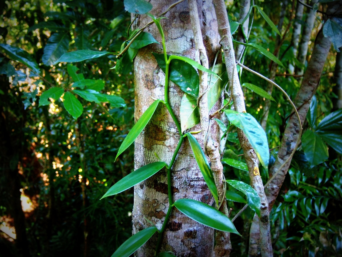 Rainforest Paradise in Far North Queensland.