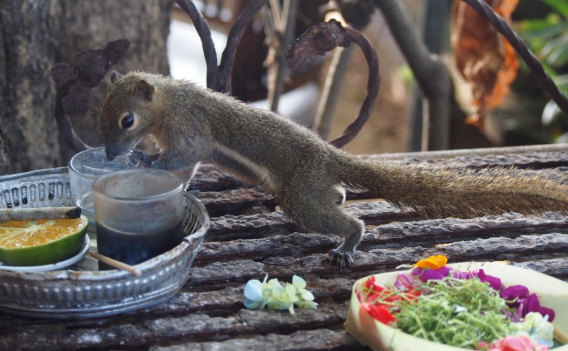 Bali, Offerings and Squirrels