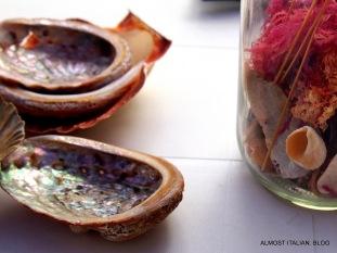 I love shells