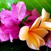 Balinese Galungan