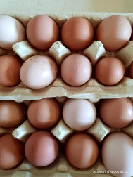 Free range eggs, one dozen a day.